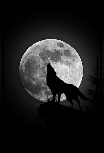 Silhouette of wolf howling in front of a full moon.