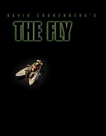 A fly on a black background.