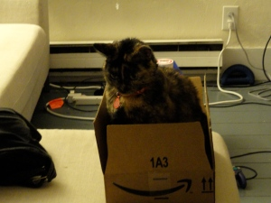 Ayla now. She loves to steal my boxes.