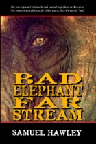 Close-up of an elephant's eye